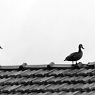 Ducks on the roof? That's quackers.  by geof