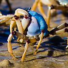 Soldier crab by shaynetwright