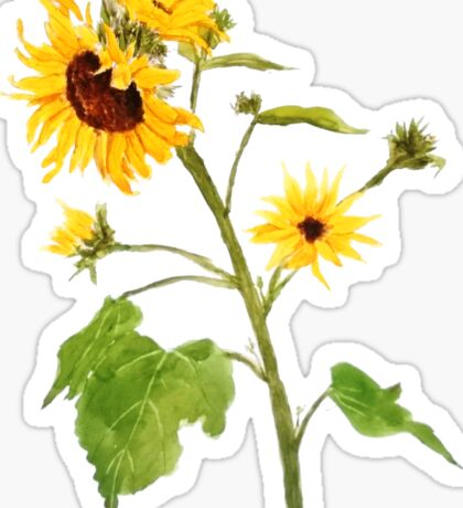 sunflower watercolor painting  Sticker