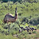 Old Man Emu and Chicks by George Petrovsky