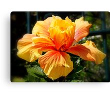 Red & Gold Hibiscus Canvas Print