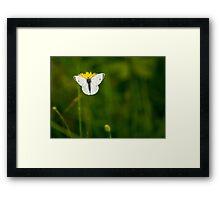 Small White Framed Print