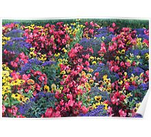 Colourfull display at butchart gardens Poster