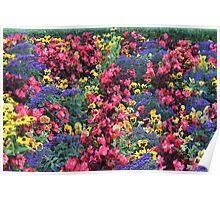 Colourfull display at butchart gardens Poster