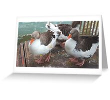 Geese Animal Greeting Card