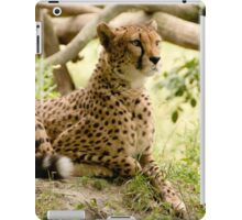 Cheetah  iPad Case/Skin