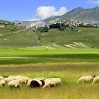 The flock by annalisa bianchetti