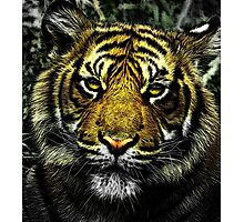 Tiger HDR Photographic Print