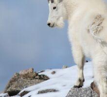 Mountain Goat in snow Sticker