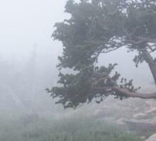 Bristlecone in fog Sticker