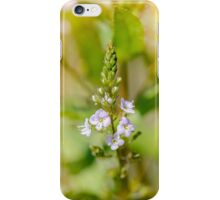 Veronica, Water Speedwell Flower iPhone Case/Skin