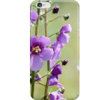 Close up of Verbascum Phoeniceum iPhone Case/Skin