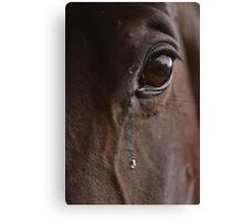Horse Tears Canvas Print
