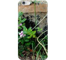 Princess Plantation 60 iPhone Case/Skin