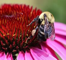 Busy Bumble Guy by Keala