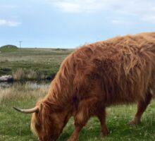 Highland Cow Sticker