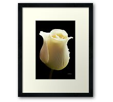 Rose with tears Framed Print