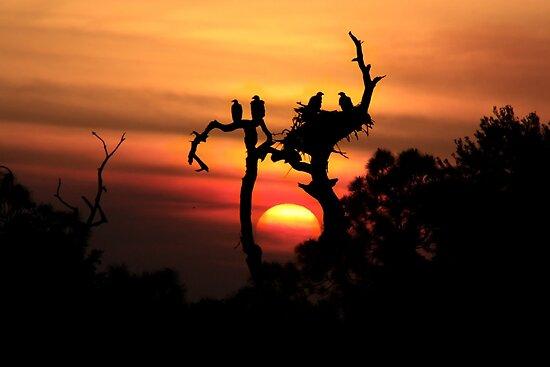 AWSOME EAGLE TREE SUNSET by TomBaumker
