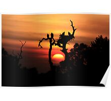 AWSOME EAGLE TREE SUNSET Poster