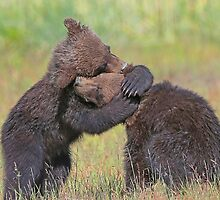 A Bear Hug by jozi1