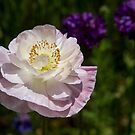 White Flower  by Cara Merino