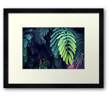 Green garden 3 Framed Print