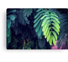 Green garden 3 Canvas Print