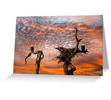 TWO BALD EAGLES Greeting Card