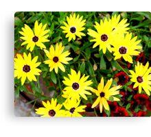 Yellow Bursts! Canvas Print