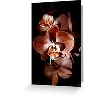 Orange Orchid Greeting Card
