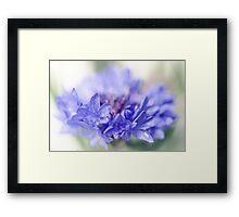 Blue Beauty..... (part 2) Framed Print