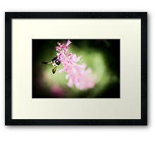 He's Just a Little Guy Framed Print