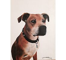 Staffordshire bull terrier painting oil on canvas Photographic Print