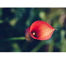 Nectarine-esque Photographic Print
