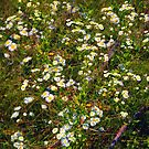 Meadow Full of Stars by RC deWinter