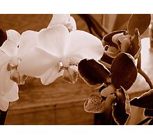 Sepia Orchids ^ Photographic Print