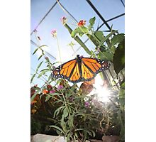 The World of Monarch Photographic Print