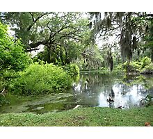 Southern Tranquility Photographic Print