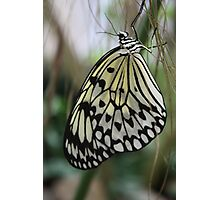 Paper Kite Butterfly Photographic Print