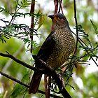 Female Bowerbird by sandysartstudio