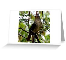 Female Bowerbird Greeting Card