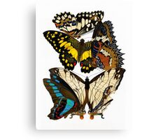 Butterflies, lush vintage etomology illustration Canvas Print