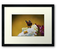 We are all butterflies. Earth is our chrysalis. Framed Print