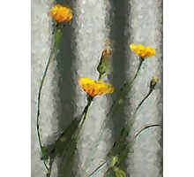 Yellow Dandelions in front of the Iron Fence Photographic Print