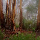 Byways are My Ways  - Mount Wilson  NSW - The HDR Experience by Philip Johnson