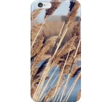 bulrushes growing in a marsh iPhone Case/Skin