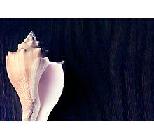 Marine sea shell dark blue background Photographic Print
