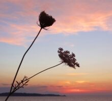 Queen Anne's Lace by the Seashore Sticker
