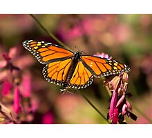 Social Butterfly Photographic Print