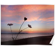 Queen Anne's Lace by the Seashore Poster